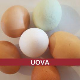 Corso di cucina: le UOVA